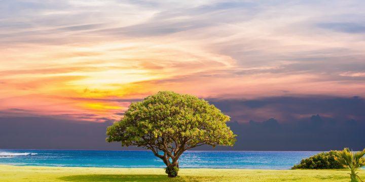 Numérique: la généalogie entre dans une nouvelle ère